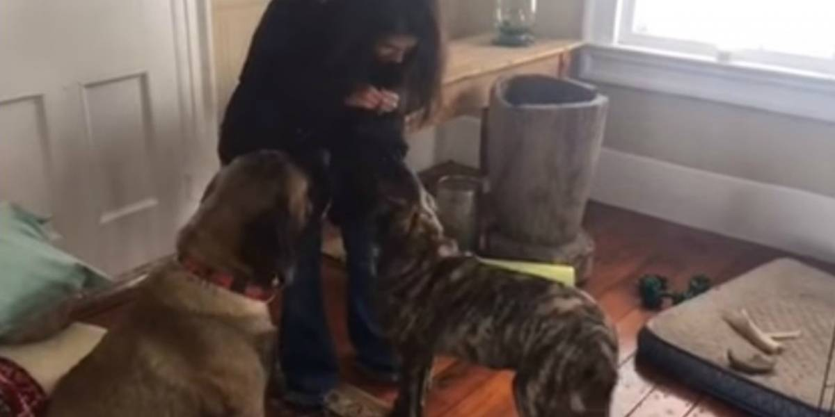 Video: perro le enseña a sentarse a otro para recibir jugosa recompensa y se vuelve viral