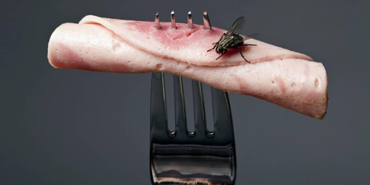 Inexplicable y asqueroso: gigantesca plaga de moscas mantiene a un pueblo ruso viviendo una pesadilla
