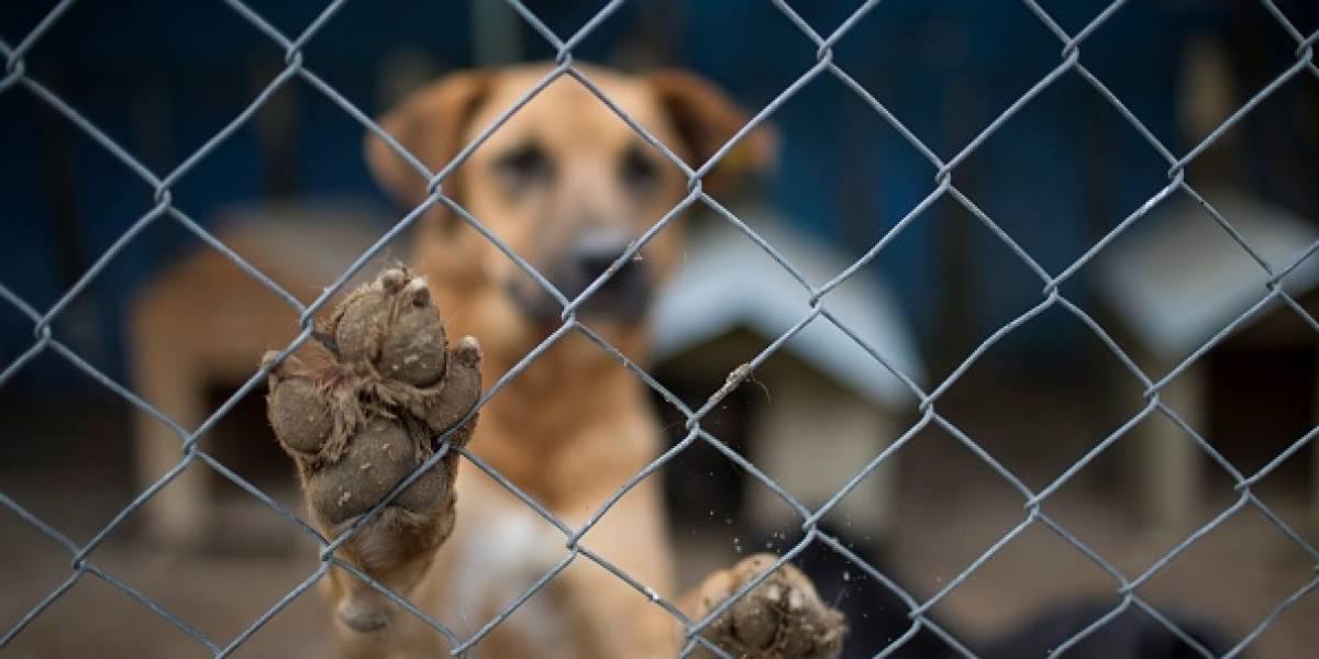 """""""Sorprendentemente brutal"""": la esperanzadora historia del perrito que sobrevivió a los disparos en la cabeza que le dio su propio dueño"""