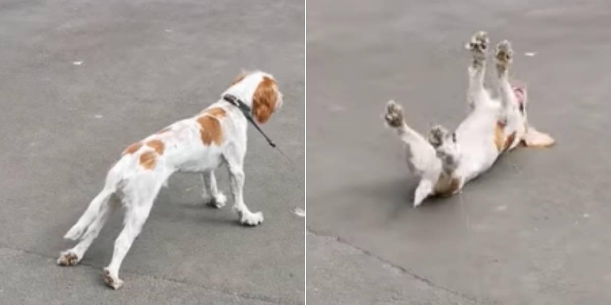 La verdadera historia que se esconde detrás del video del perro 'asustadizo' que es viral en redes