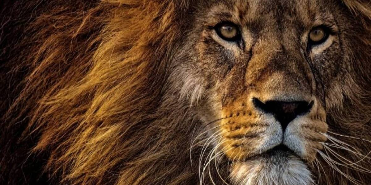 O que significa sonhar com leão?