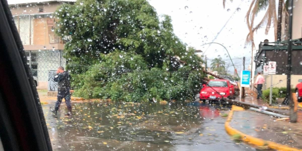 Detectan 65 árboles en riesgo de caer por lluvia, pero no los retiran