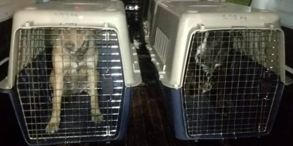 Dos perritas fueron lanzadas de un puente peatonal en Bogotá