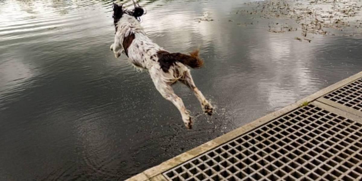 La imagen de un perro congelado en una fuente generó conmoción