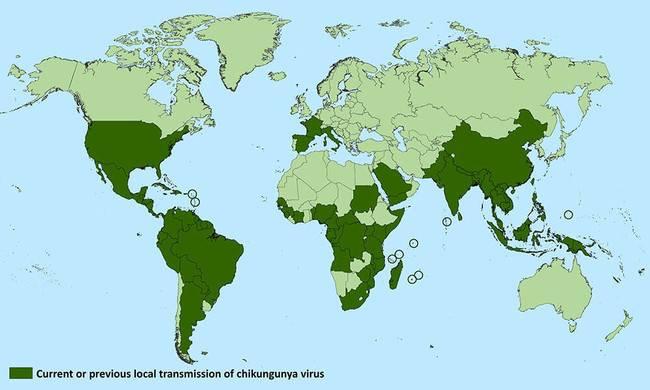 En España se detectan diversos casos de una enfermedad que se creía originaria de climas tropicales