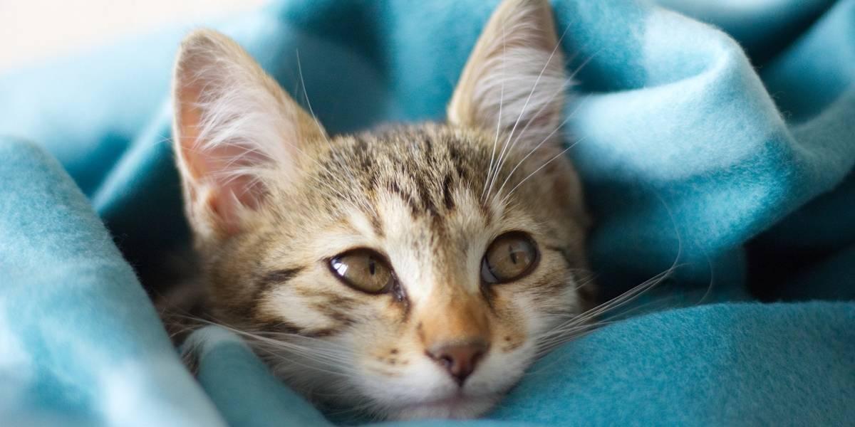 Vara da Família em Santa Catarina concede guarda compartilhada de gato