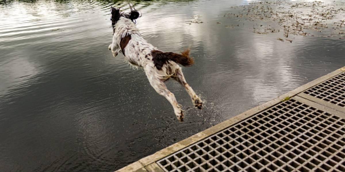 """""""Estaba viejo y sin aliento"""": mujer fue acusada de crueldad animal por empujar a su perro a un lago y mirar cómo se ahogaba"""