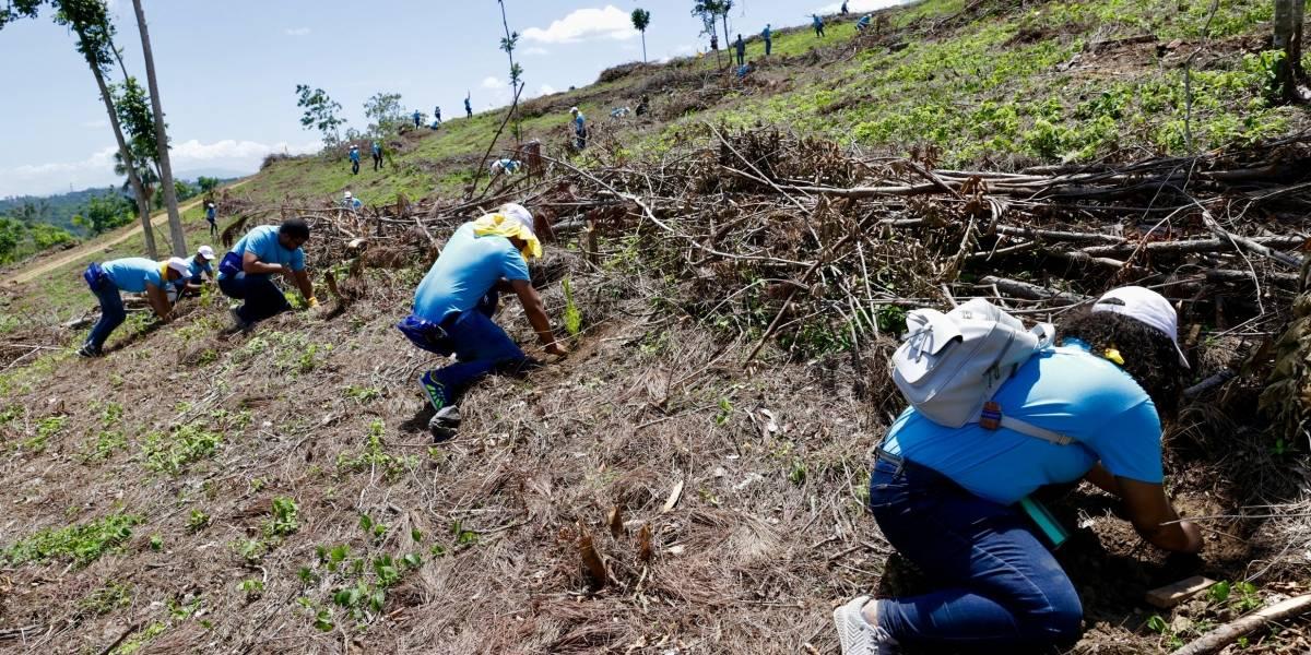 Empleados del Popular siembran 14,000 árboles en zona de la Sierra