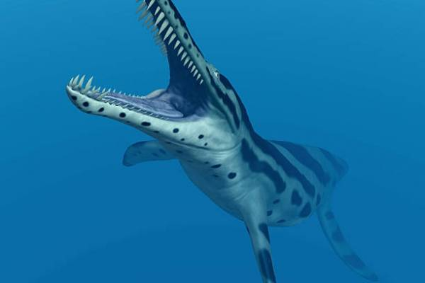 Monstruos en el desierto: Recuperan en Calama restos del depredador marino más letal del Jurásico