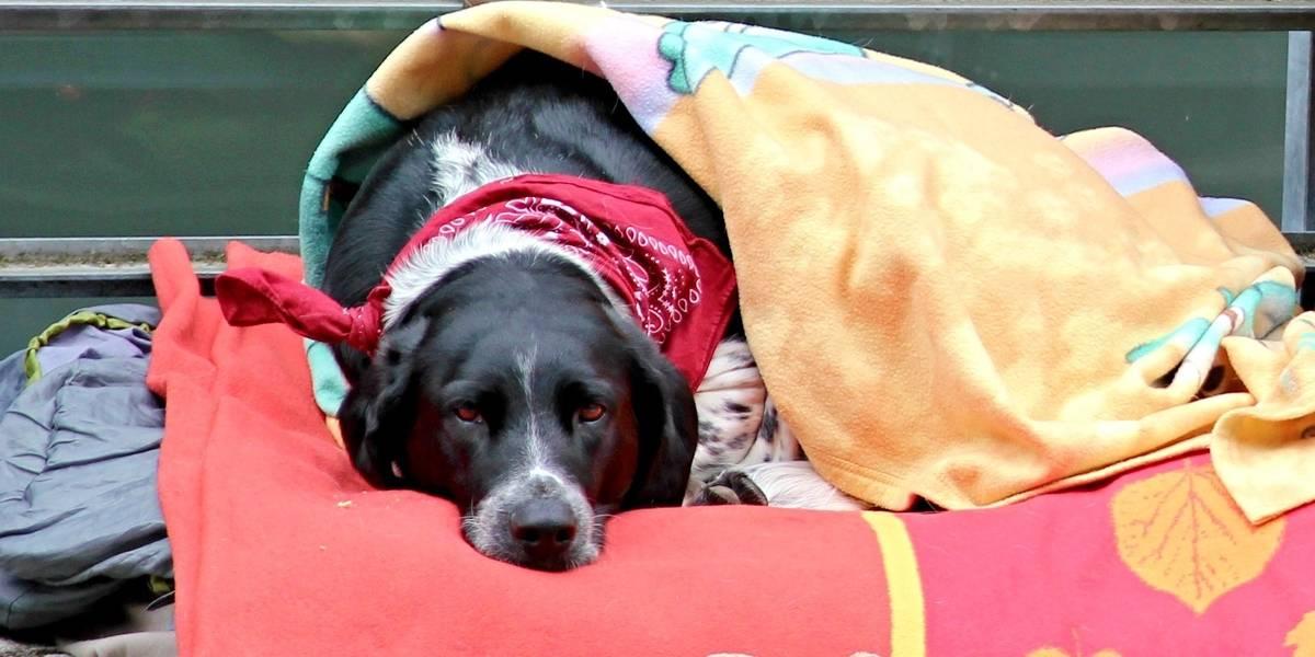 Aqueça um focinho: Conheça a campanha do agasalho para animais abandonados