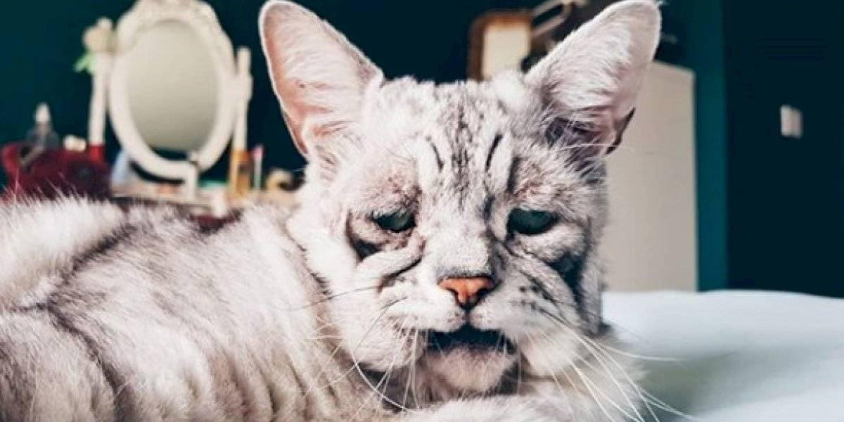 """La extraña enfermedad que convirtió a este gato en el """"más triste del mundo"""""""