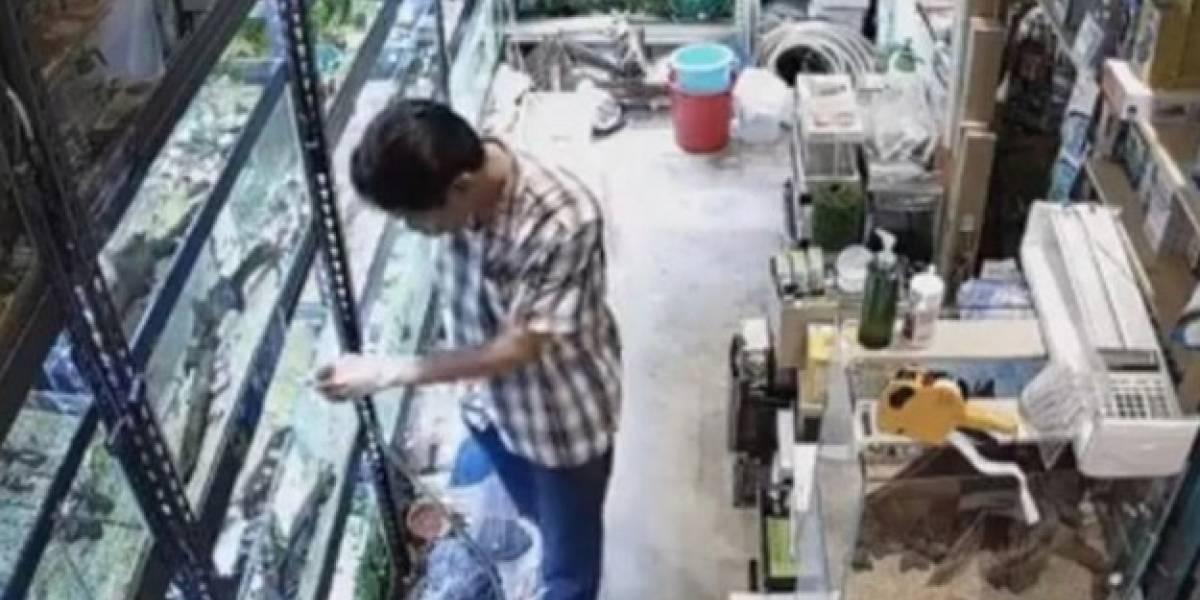 Captan a hombre que envenena a decenas de peces de un acuario