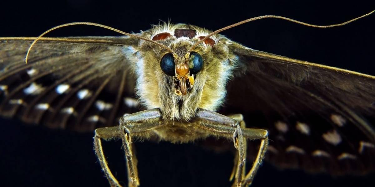 Científicos descubren que insectos pueden trasladar gérmenes muy peligrosos al interior de los hospitales