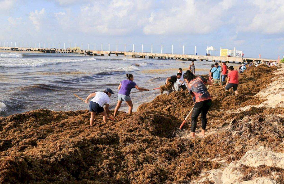 En los municipios de Solidaridad, Tulum, Puerto Morelos, Othón P. Blanco y Benito Juárez se intensificó la limpieza Foto: Cuartoscuro