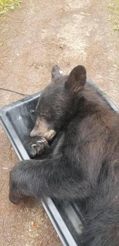 Urso guarda-roupa