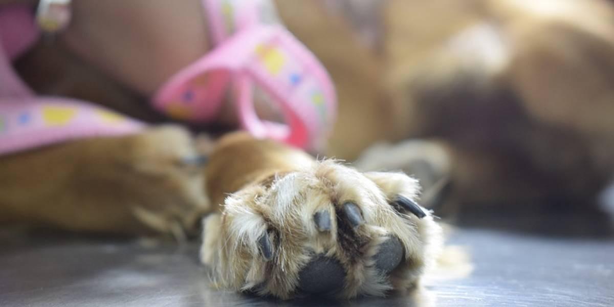 Una veterinaria lee un cuento a un perro enfermo y su gesto se hace viral