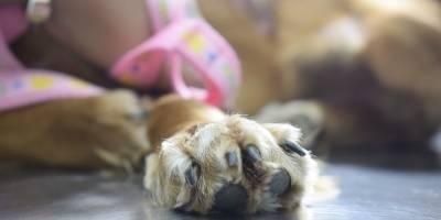 perros venta ilegal mascotas malltrato animal ecuador noticias