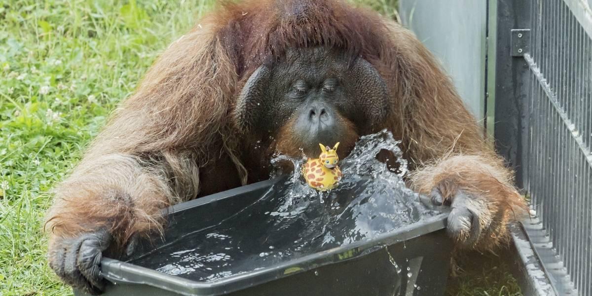 Sedema emite datos sobre presupuesto de zoos de la CDMX