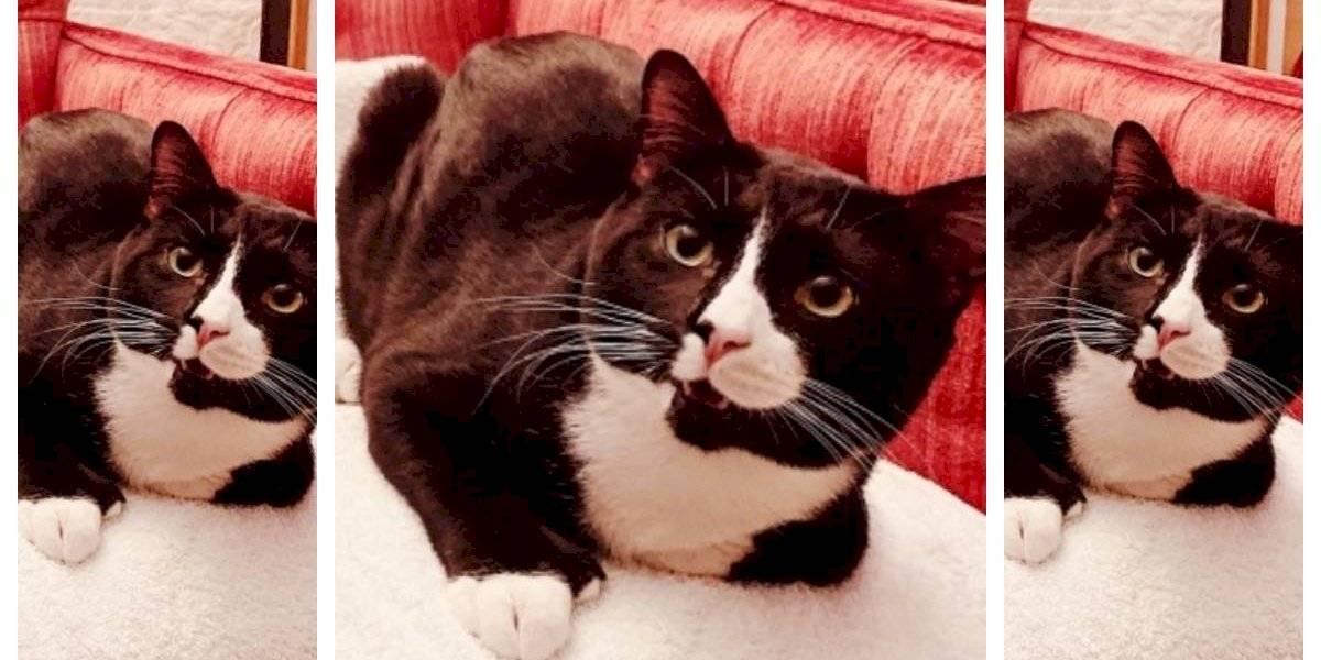 Gato sobrevivió a un ciclo completo de 35 minutos dentro de una lavadora con enjuague y centrifugado incluido