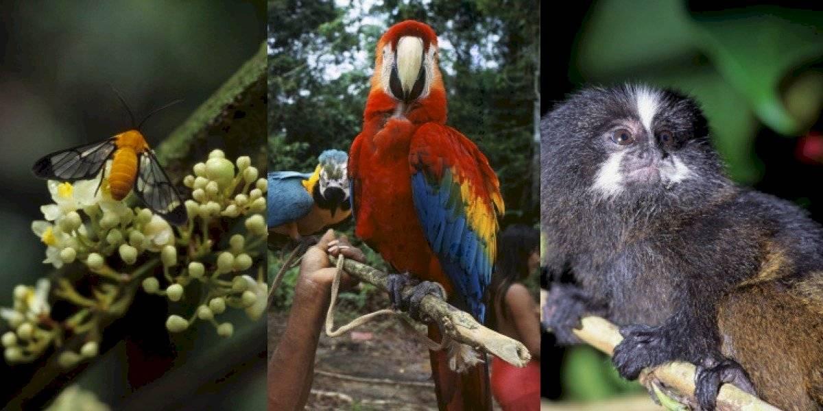 Celebran 13 años de creación de refugio de vida silvestre en Amazonía Ecuador