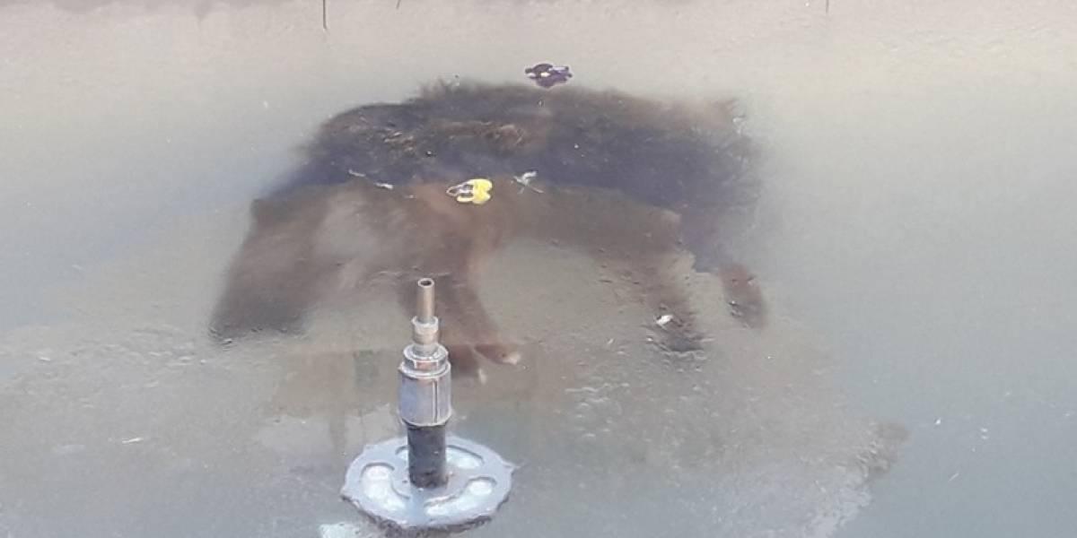 Foto de un perrito congelado dentro de una fuente impacta en redes sociales