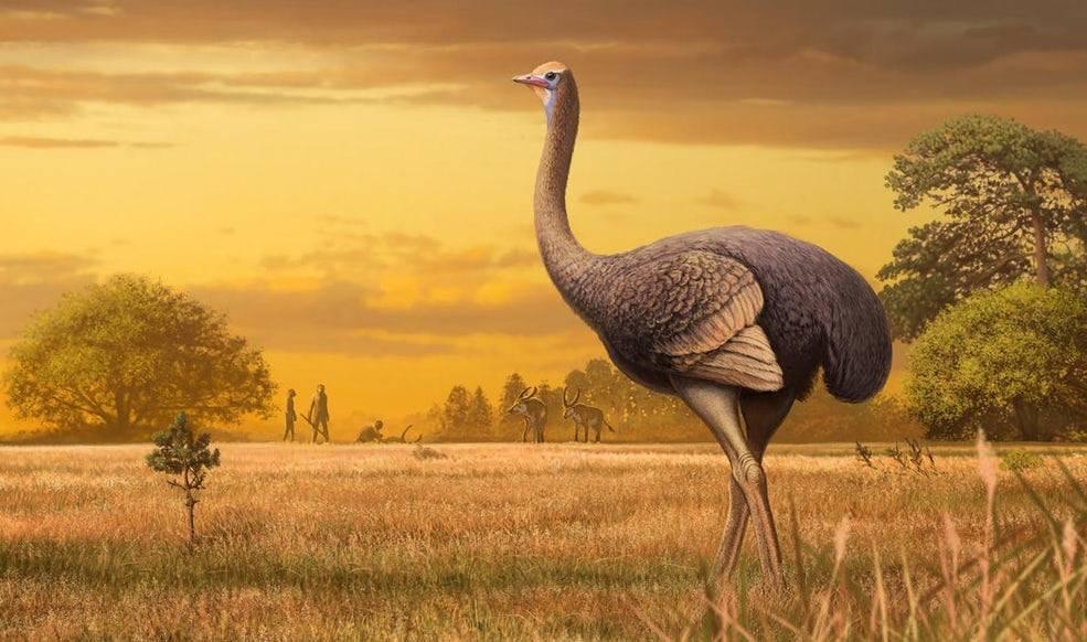 Científicos encuentran restos fósiles de un ave de 3 metros y casi media tonelada de peso