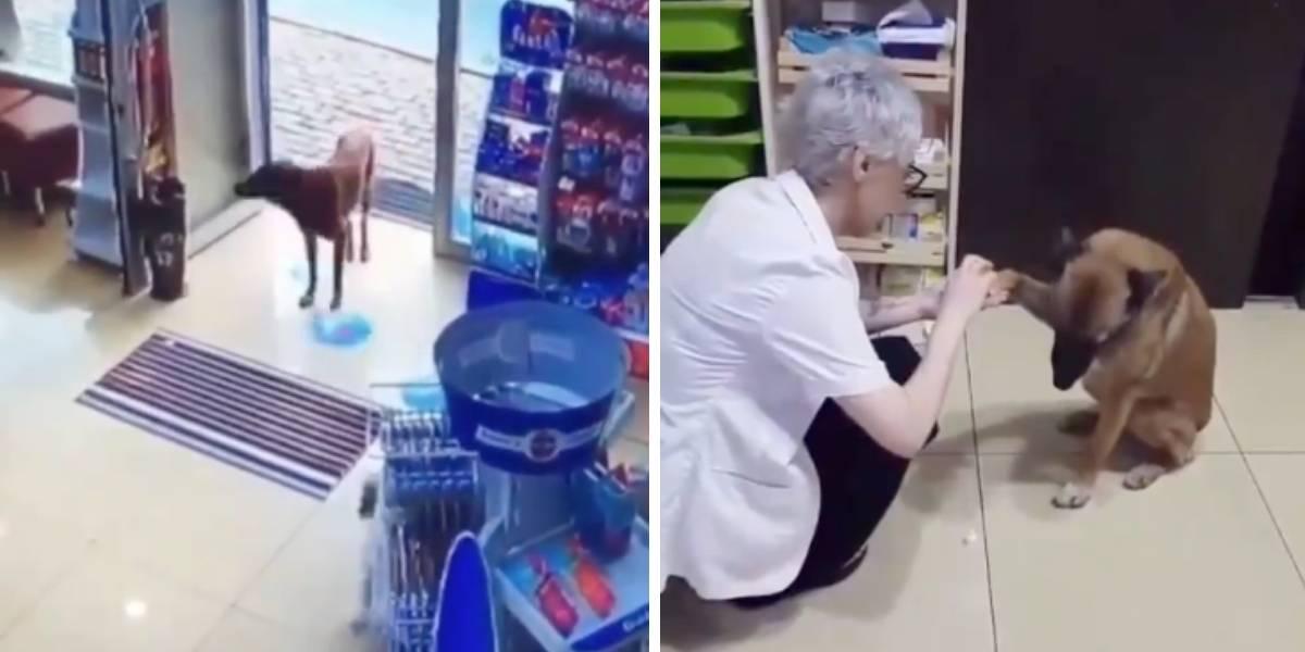 ¡Qué ternura! Este perrito entra a la farmacia para que curen su pata herida
