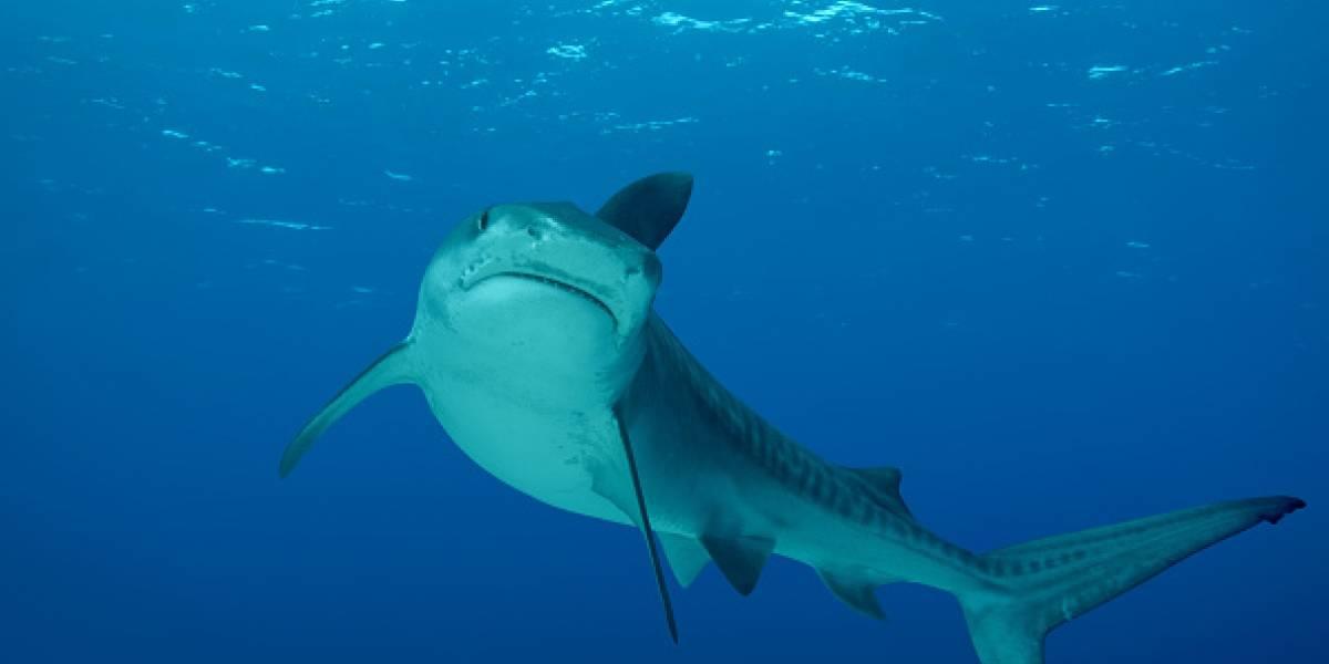 Mujer de 21 años murió tras ser atacada por tiburones durante sus vacaciones en Bahamas