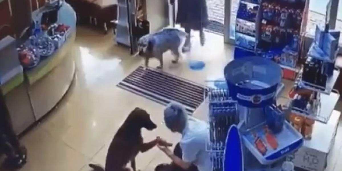 Cachorra machucada busca ajuda em farmácia; veja o vídeo