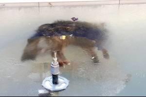 Foto de perro congelado en Bolivia
