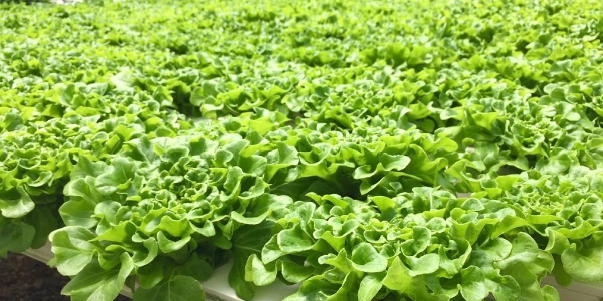 Supermercados Selectos comprará las cosechas de los agricultores locales