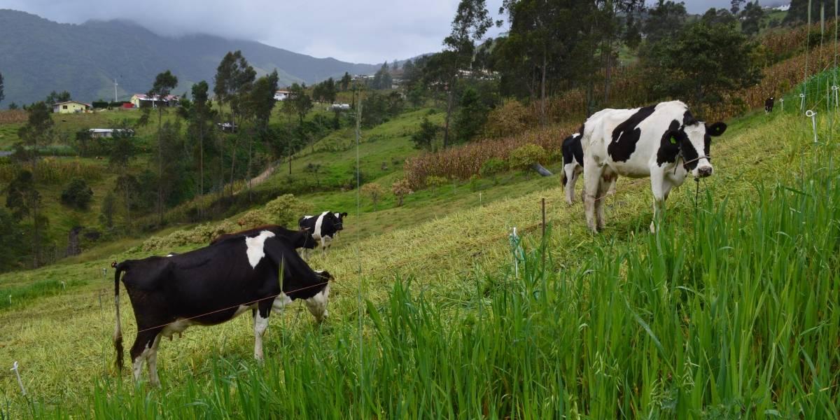 """La """"Ganadería Climáticamente Inteligente"""" se consolida en Ecuador"""