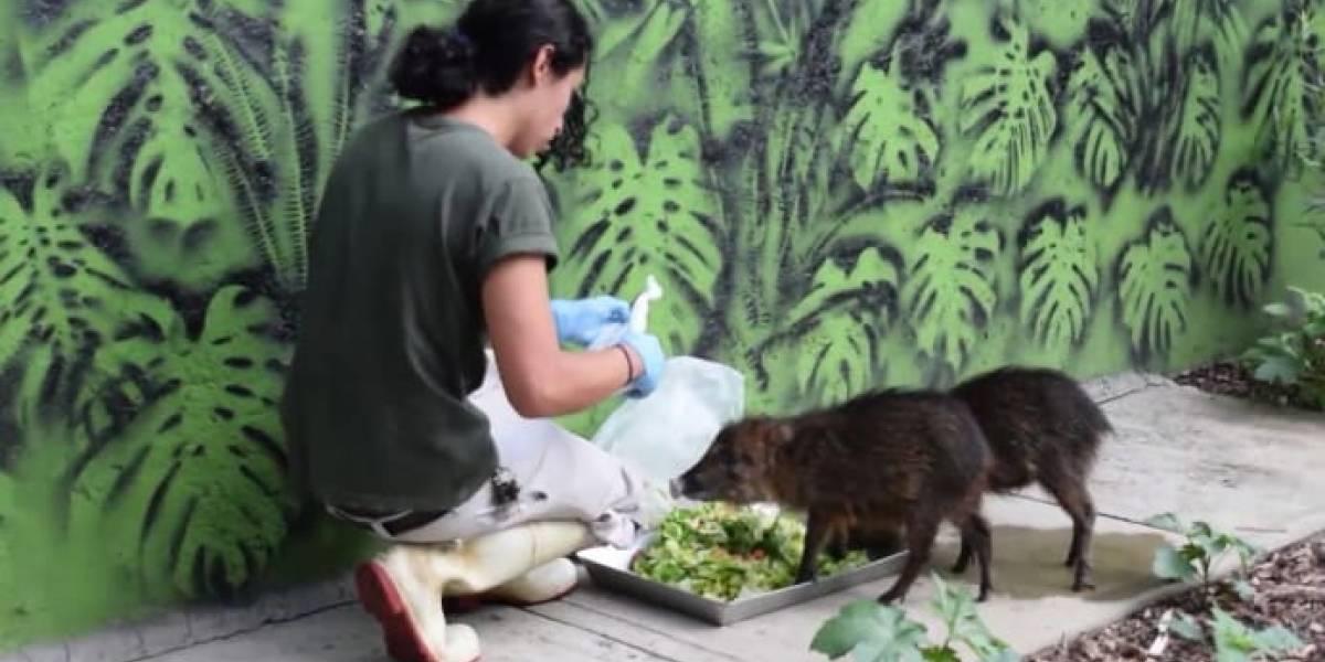 """""""Yo no te puedo hablar de finanzas"""", responde director de zoos a Publimetro"""