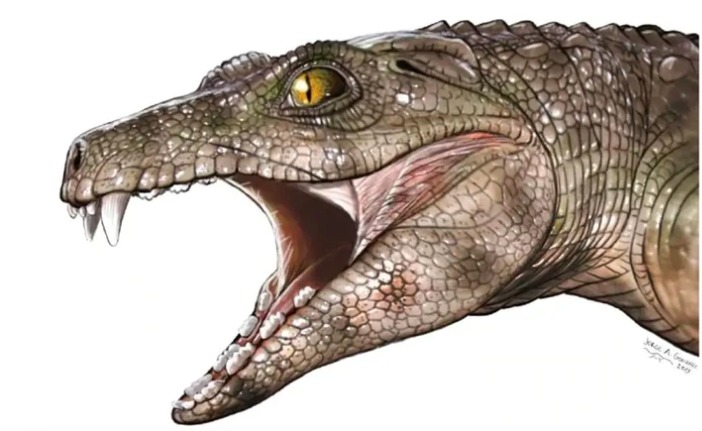 Sorpresa: Descubren que los cocodrilos de hace 200 millones de años eran vegetarianos