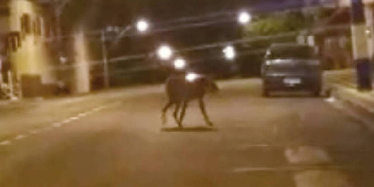 VÍDEO: PMs tomam susto com lobo selvagem correndo solto por cidade do interior