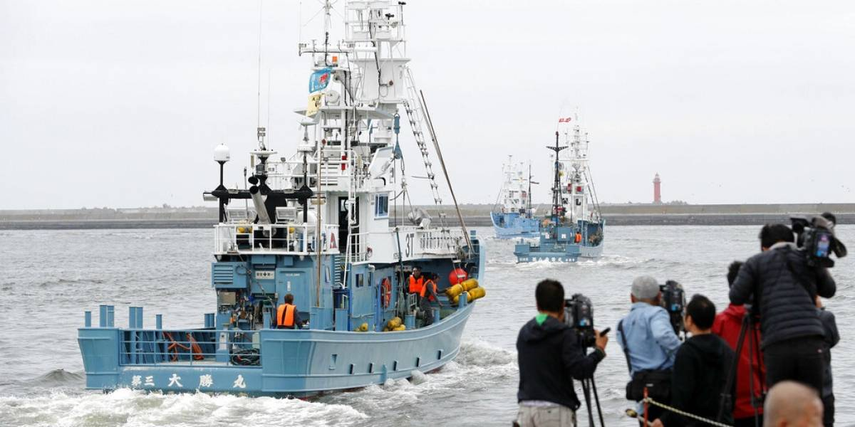 Japón reanuda la caza comercial de ballenas tras 31 años