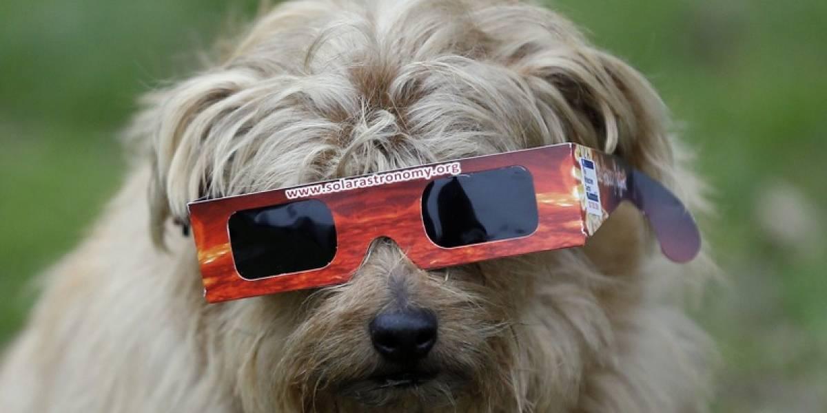 ¿Qué cuidados hay que tener con tus perros y gatos durante el eclipse solar?