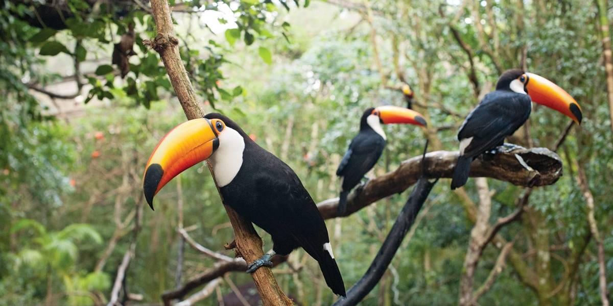 Parque das Aves, em Foz do Iguaçu, é santuário para espécies em ...