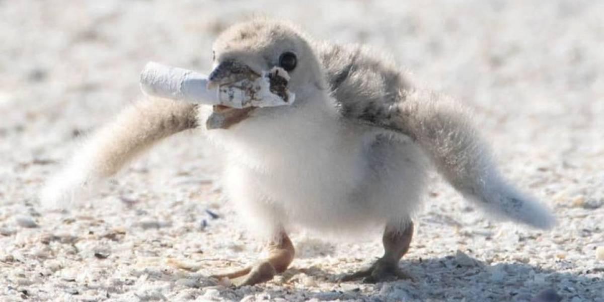 Fotógrafa captura cena em que pássaro dá bituca de cigarro como alimento a filhote