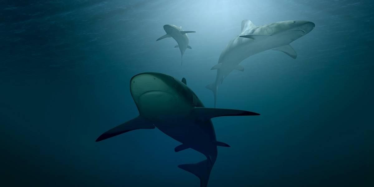 Increíble pero cierto: Descubren tiburones vivos nadando dentro de un volcán activo