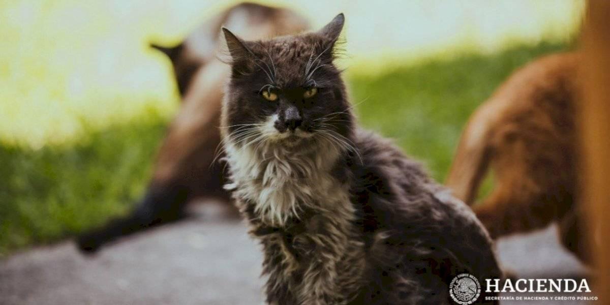 Muere Gandalla, uno de los gatitos de Palacio Nacional