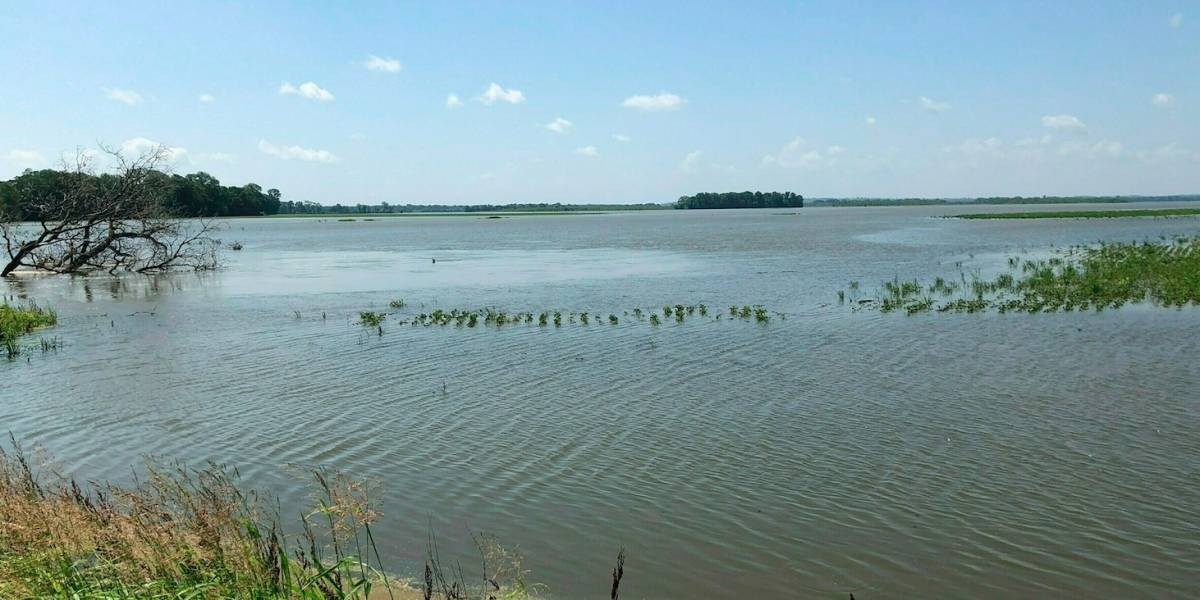 Ríos desbordados afectan cultivos en Tennessee