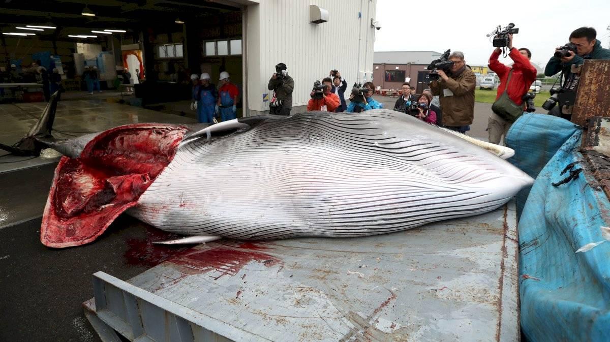 Caza de ballenas en Japón