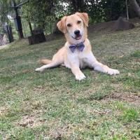 Cushqui, el perrito que adoptó Epmmop