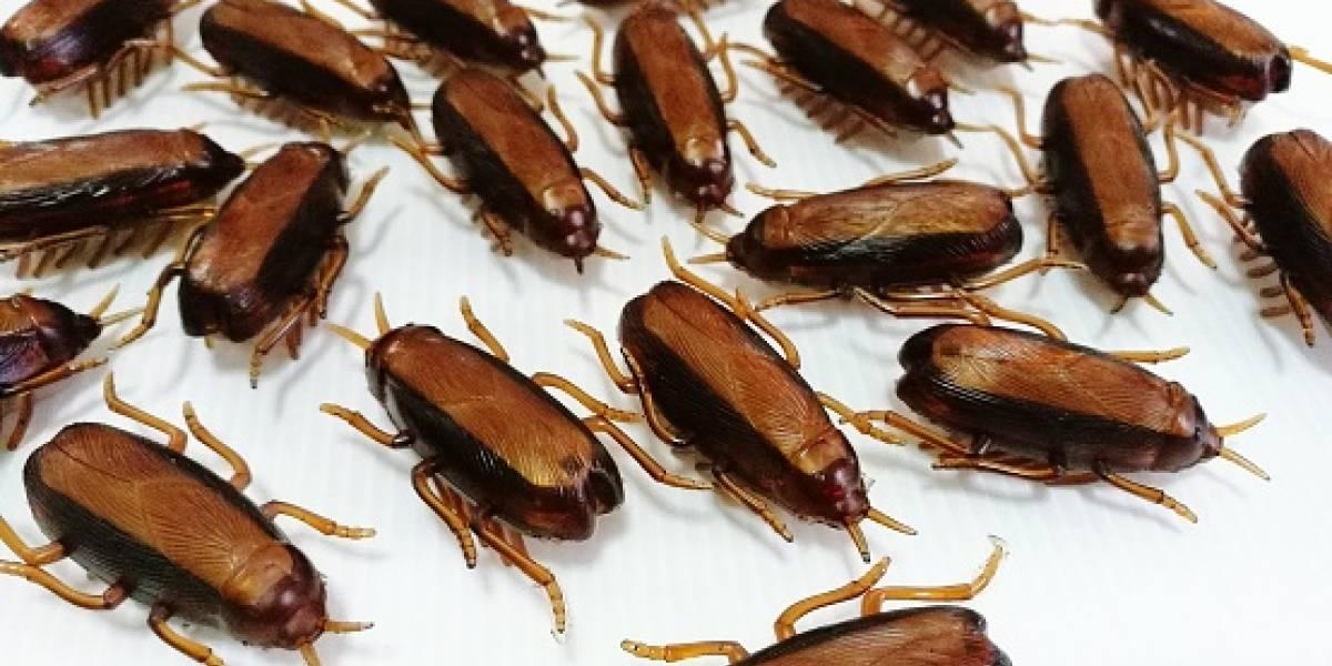 """Alarmante advertencia: investigación revela que las cucarachas se están convirtiendo una plaga """"casi imposible"""" de matar con insecticidas"""