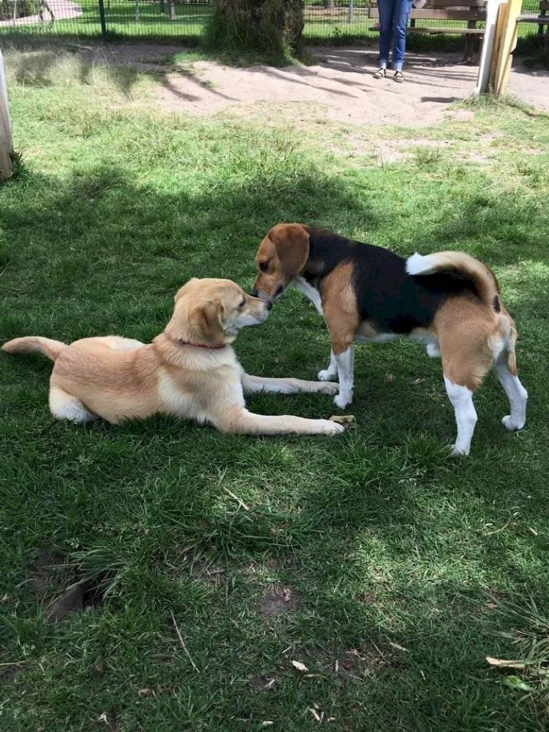 Cushqui jugando con su amigo