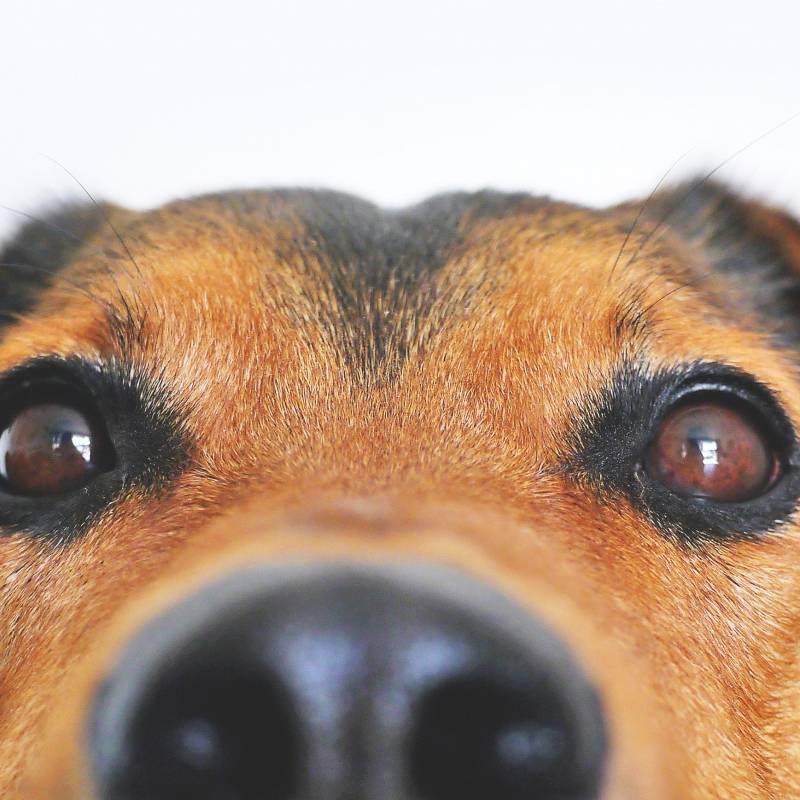 Tu perro puede estar en peligro: Estados Unidos relaciona 16 marcas de comida para mascotas con enfermedades cardíacas