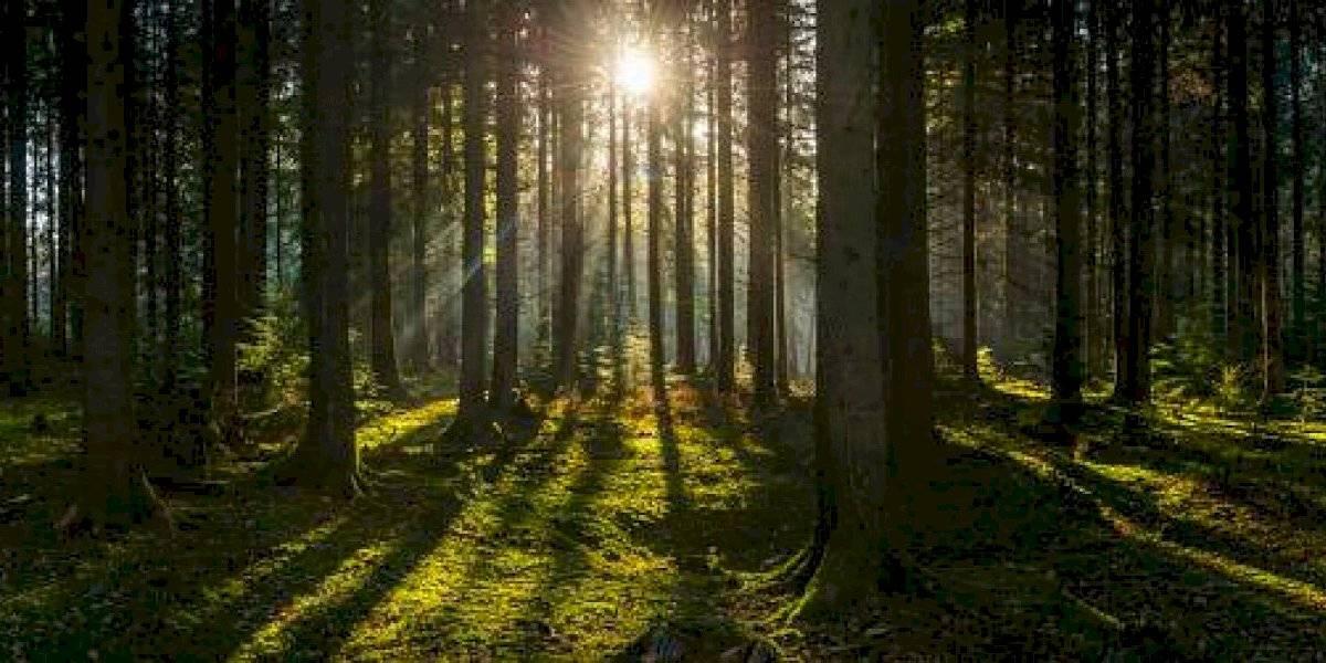 ¿Cuántos árboles debemos plantar para salvar a la Tierra?