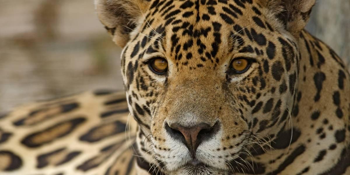 Ante sequía en México, instalan bebederos para evitar que especies en peligro de extinción mueran de sed