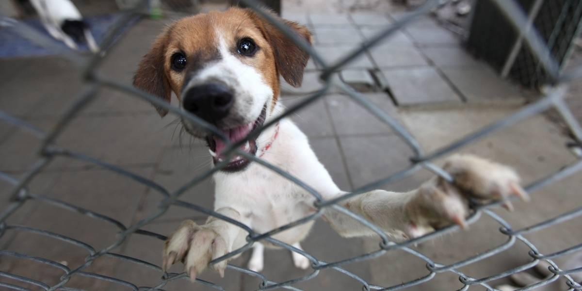¡Por primera vez en Colombia! Condenan a hombre que asesinó a un perrito